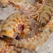 Celebra tu Fin de Año con el mejor marisco en Restaurante El Pesquero